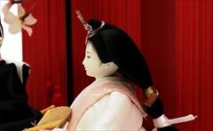 左京 京十一番親王 -紅景 色々鳳凰-